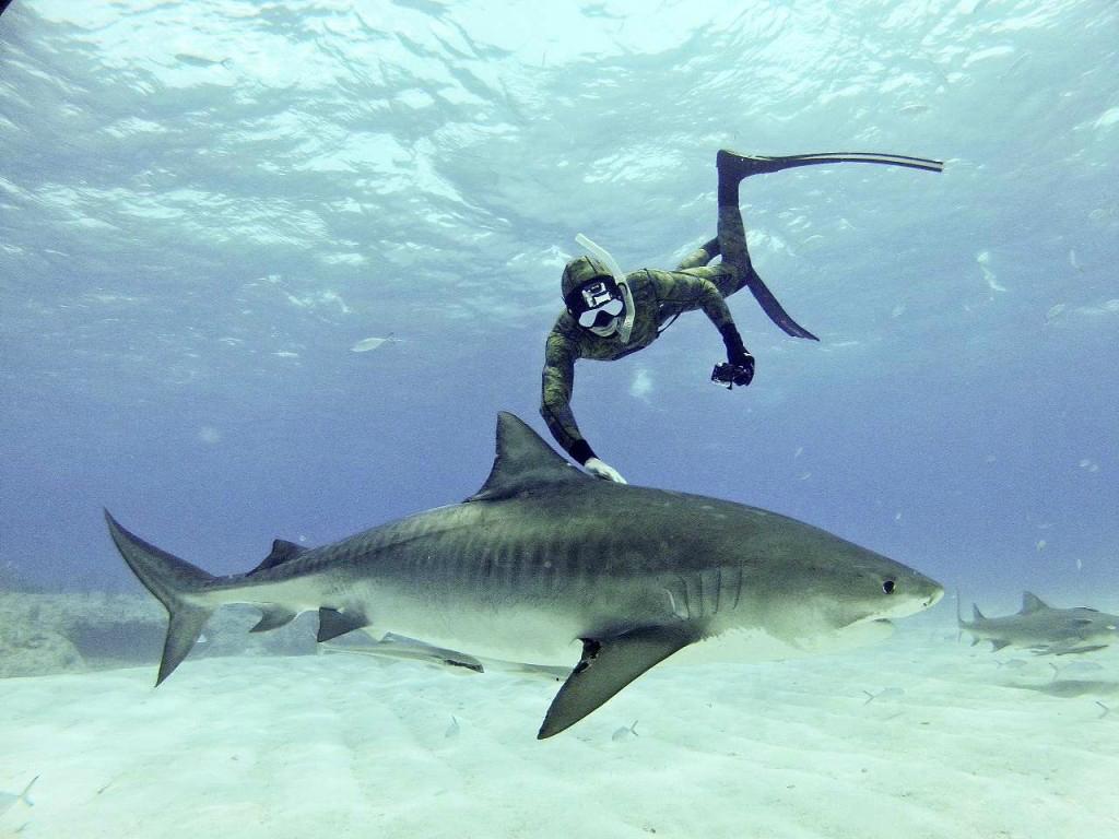 Gibt es wirklich mehr Haiangriffe als sonst oder kommt uns das nur so vor?