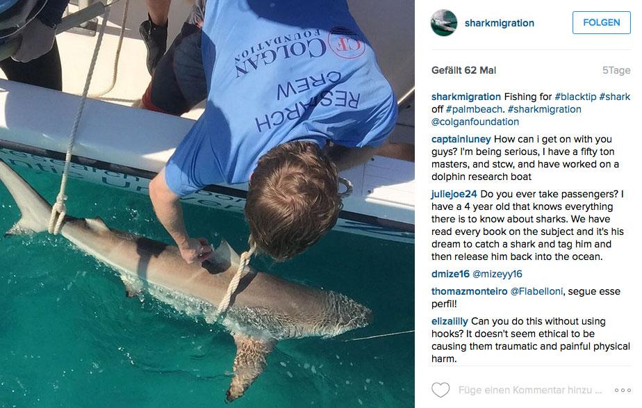 ...einem dieser Burschen hier. Weltweit wurde übrigens noch kein Mensch von so einem Schwarzspitzenhai angegriffen.