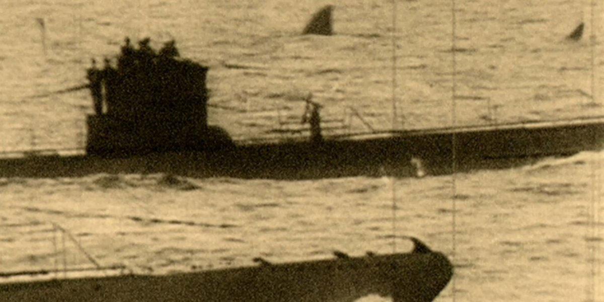 Der Beweis: Rücken- und Schwanzflosse eines Urhais im Hintergrund.