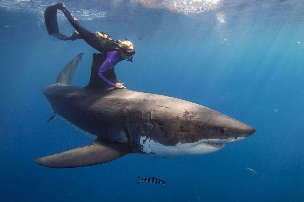 Die International Ocean Film Tour zeigt ab März die besten Filme rund um Meer und Wassersport.