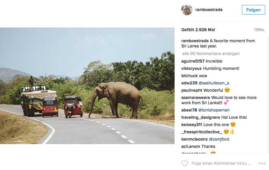 Auf Sri Lankas Straßen gilt eben noch das Recht des Stärkeren.