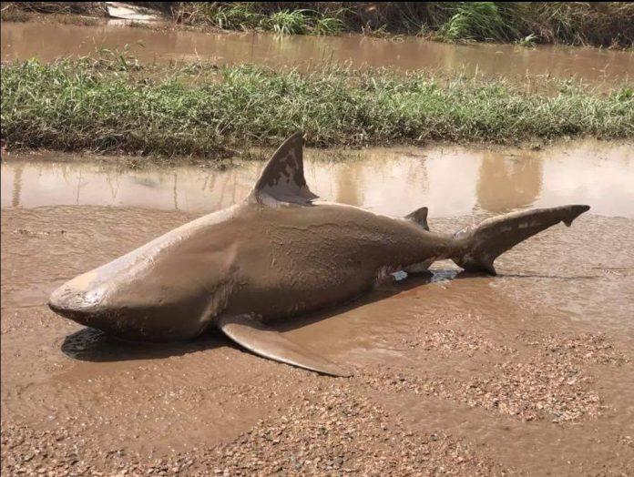 Ein Hai mitten in einer Kleinstadt, das kann nur ein Sharknado gewesen sein.