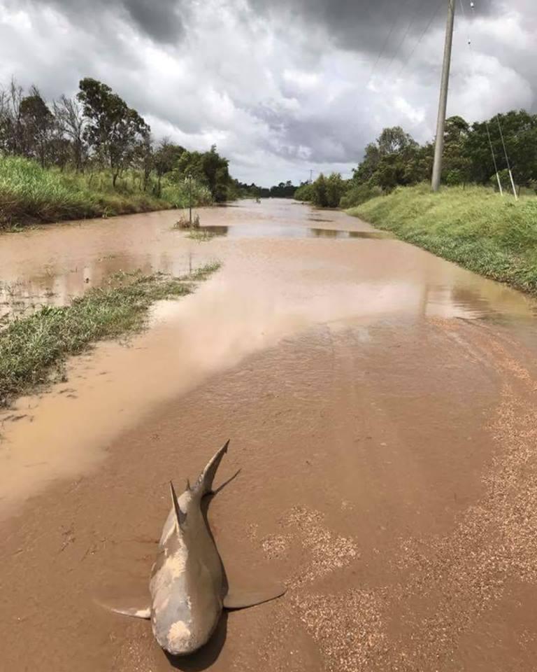 Wer sich aber die Straße genauer ansieht, kann erkennen, welche Schlammmassen sich hier wohl kurz zuvor entlangwälzten. Credit: Queensland Fire and Emergency Services