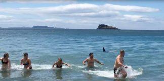Ein Orca, der sich einen Spaß erlaubt