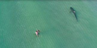 News der Woche mit einem Hai in Miami