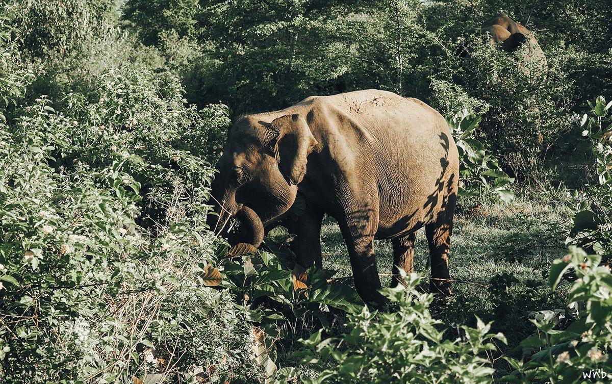 Glückliche Elefanten sind freie Elefanten