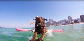 Bono the Surf Dog