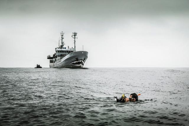 """Im Vordergrund York, im Hintergrund das Schiff """"Bob Barker"""" von Sea Shepherd."""