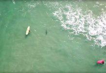 Haie und Surfer in friedlicher Koexistenz
