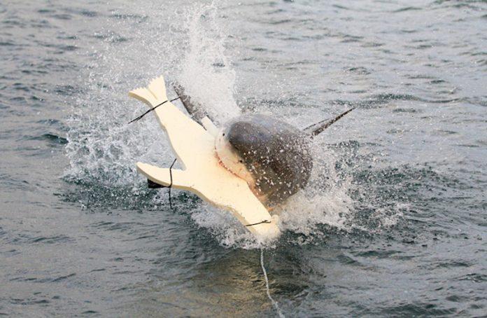 Anti-Hai_Mittel im Test