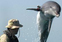 Auch ein Delfin hat mal einen schlechten Tag