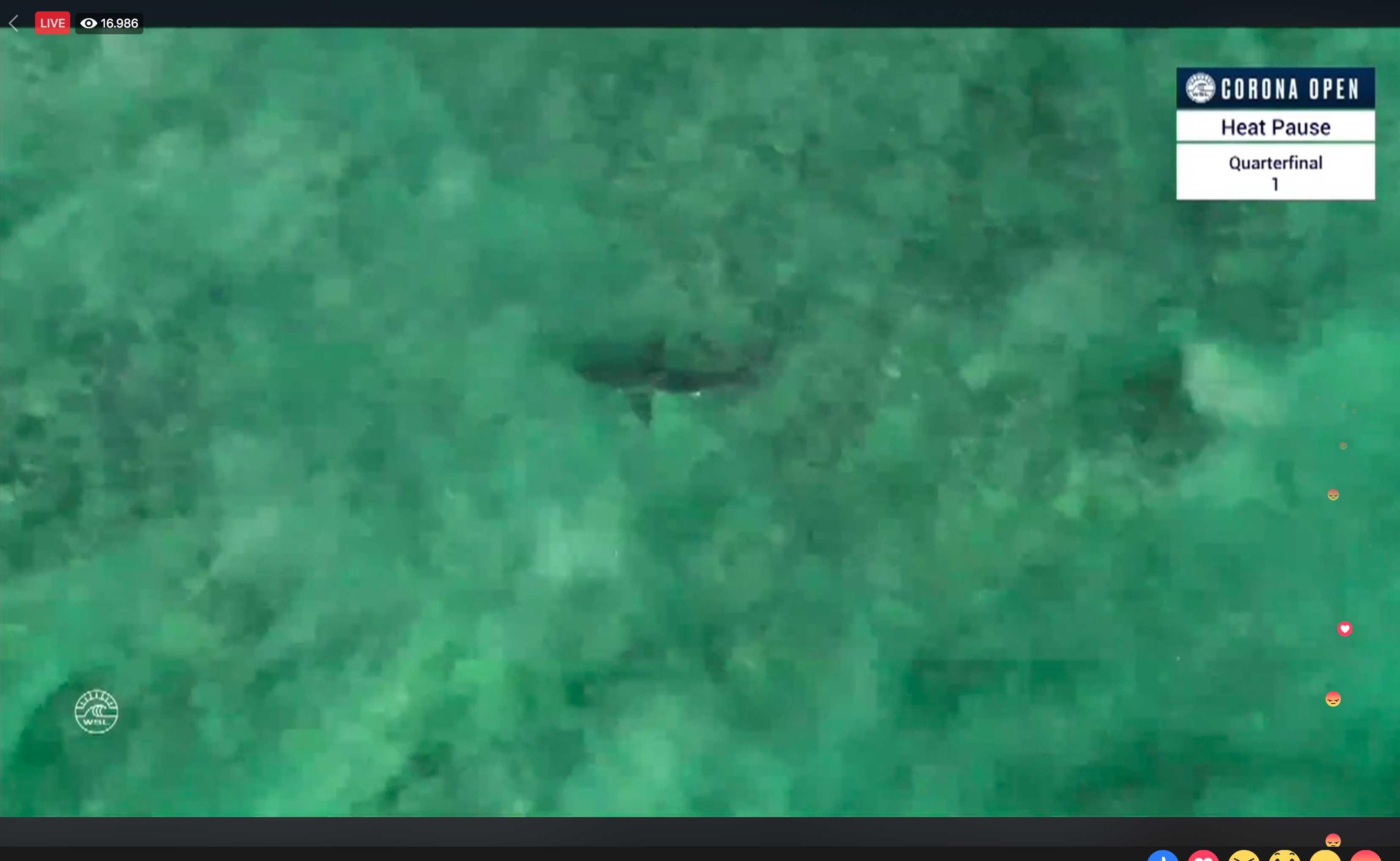 Als ein Weißer Hai am Finaltag für eine Unterbrechung sorgte, sahen knapp 17.000 Fans zu.